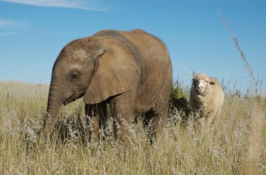 animal-buds-album-elephant-110113