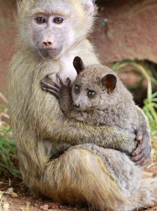 i_strange_animal_couples_012_5039f2a18f7e3