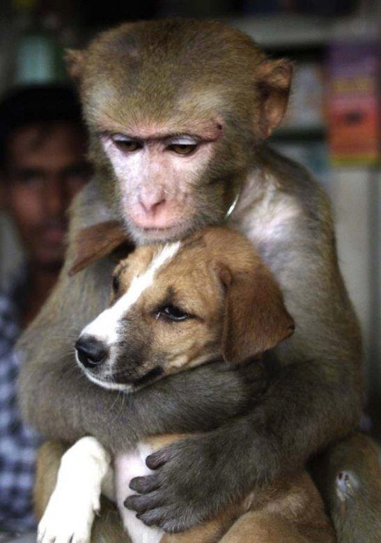 i_strange_animal_couples_032_5039f377f0982