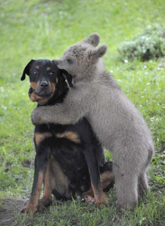 i_strange_animal_couples_045_5039f44c59d5f