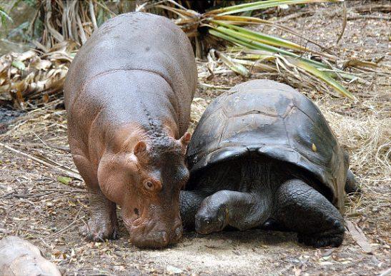 Oddest-Animal-Couples-08