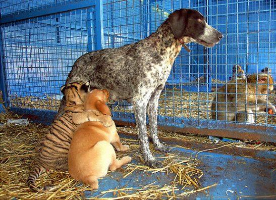 Oddest-Animal-Couples-12