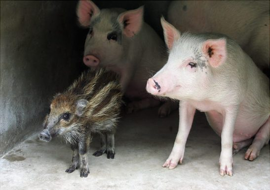 Oddest-Animal-Couples-17